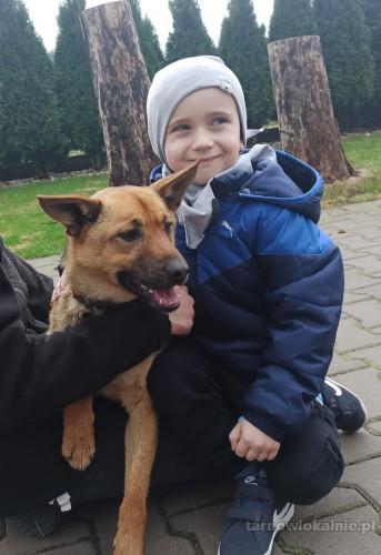 Max, cudowny psiak szuka kochającego domu!