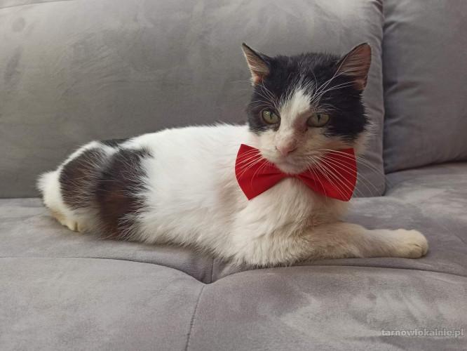 Bonifacy - domowy kotek szuka kochającego domu!